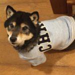 犬の洋服!リメイクで生地代0円!初心者でも簡単な作り方