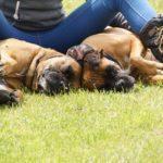 犬の寝る姿勢にはそれぞれ意味がある!くっつく場合は?