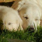 犬の室内向けゲージの場所!設置方法&注意点を解説!