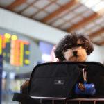 犬を飛行機に乗せると死ぬってホント?過去の事例を紹介!