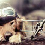 犬を飛行機に乗せたときのストレスはどれくらい?