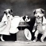 犬が服を嫌がる!ストレスをかけずに慣れさせるコツを紹介