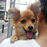犬に抱っこ紐は負担がかかる?体に安心安全な選び方を解説!