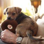 犬のおもちゃは手作りできる!誰でも作れるDIY方法とは?