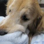 犬はペットホテルでストレスを感じる?預ける時の注意点は?
