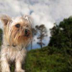犬と一緒に観光&湯けむり旅in草津!人気スポットは?